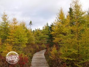 autumn fall bluff wilderness hiking trail map guide halifax