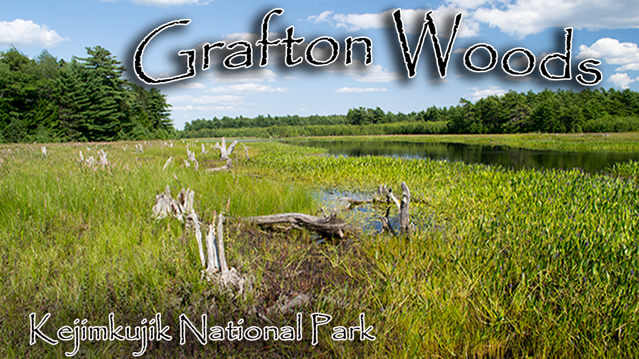 Grafton Woods Trail