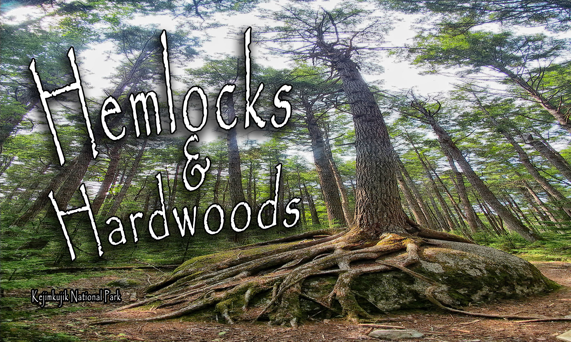 Hemlocks and Hardwoods Trail