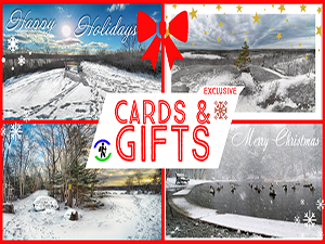 Christmas Cards & Gifts